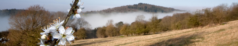 Newlands Corner and the North Downs Way is half an hour from Merrywood Park at Box Hill, Surrey